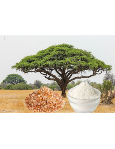 Gomme Acacia